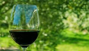"""""""Descubriendo el mundo del vino"""""""