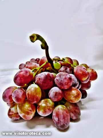 poesia-vino-dios-baco-uvas-toro